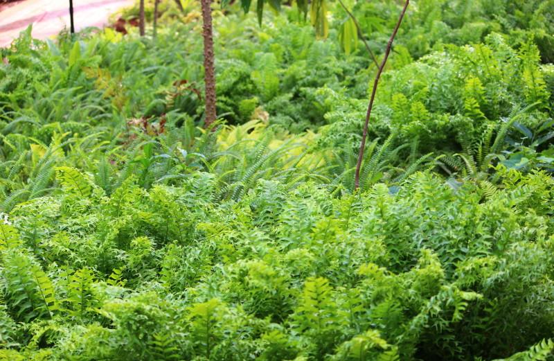 Good Fern Garden
